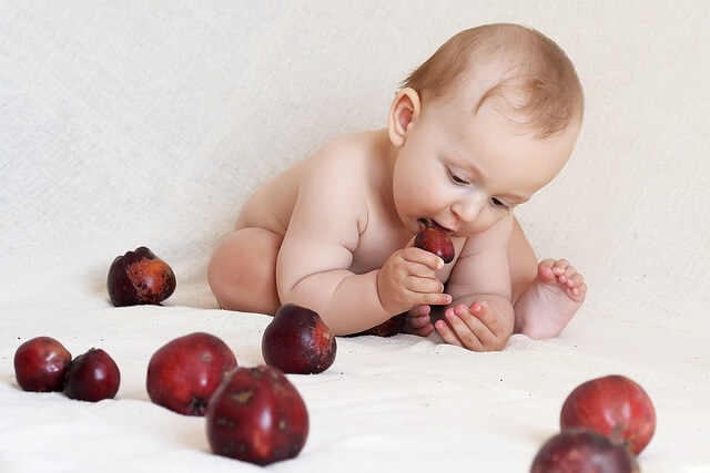 baby eating apples