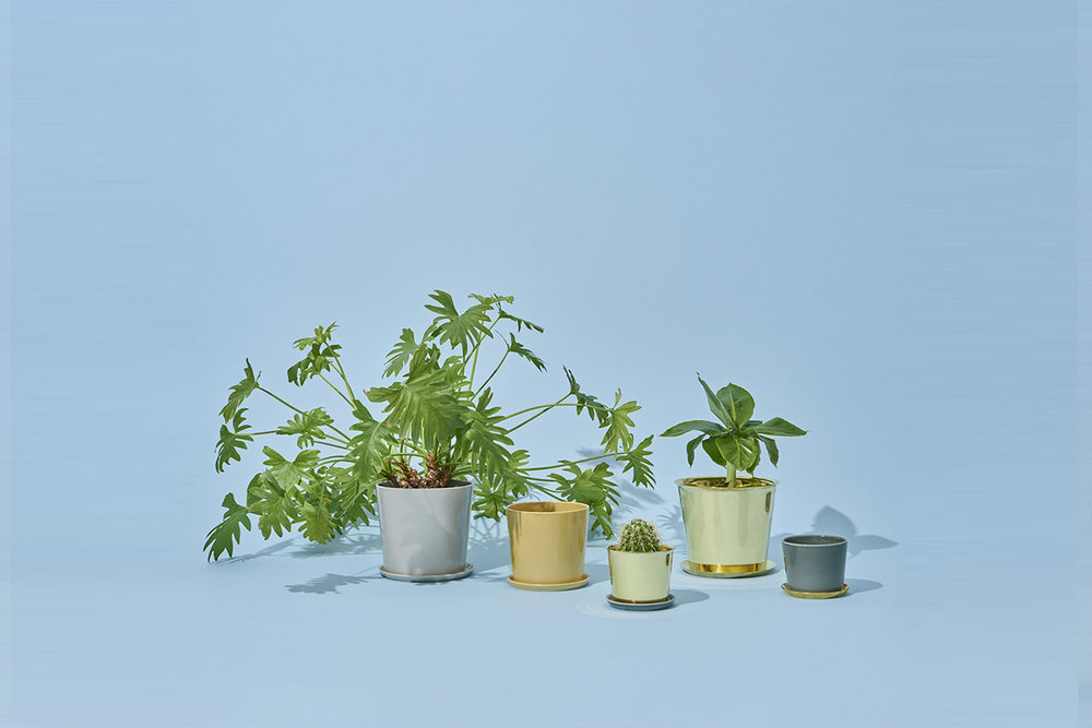 A beautiful Botanical Family: a set of brass and ceramic plant pots by  HAY .