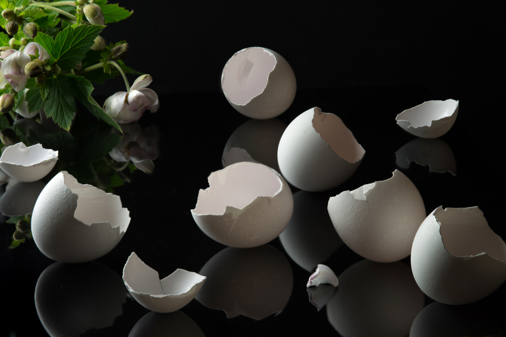 Eggshells on Black with Anemones (Vanitas)