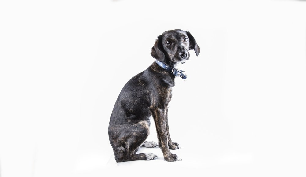 black-dog-15083463387mF.jpg