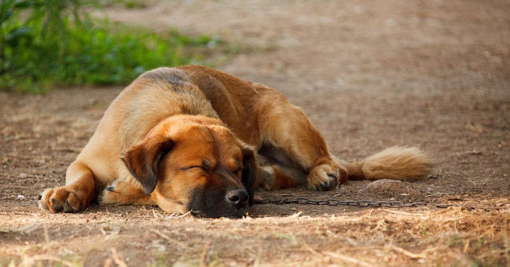 sleeping-dog-87129017161956E.jpg