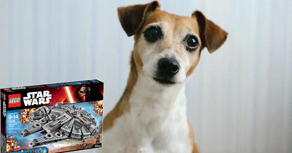 Dog and Lego.jpg