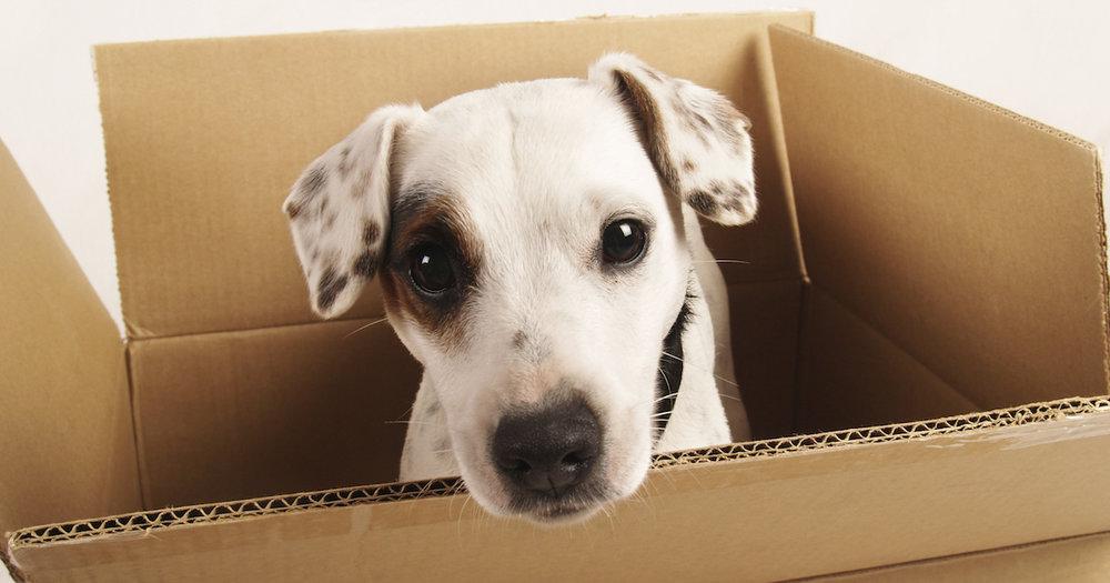 Dog-in-Box.jpg