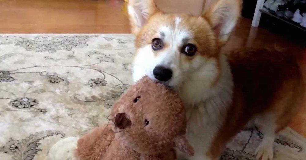 Tiny bear wont stop squeeking.jpg