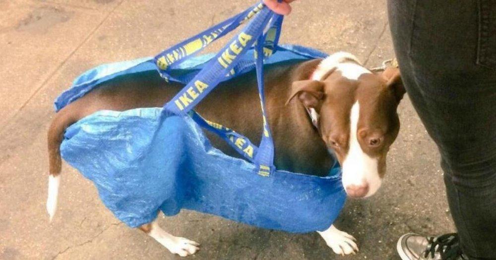Dog in ikea bag.jpg