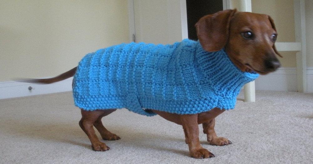 Dog Wearing Same Sweater.jpg