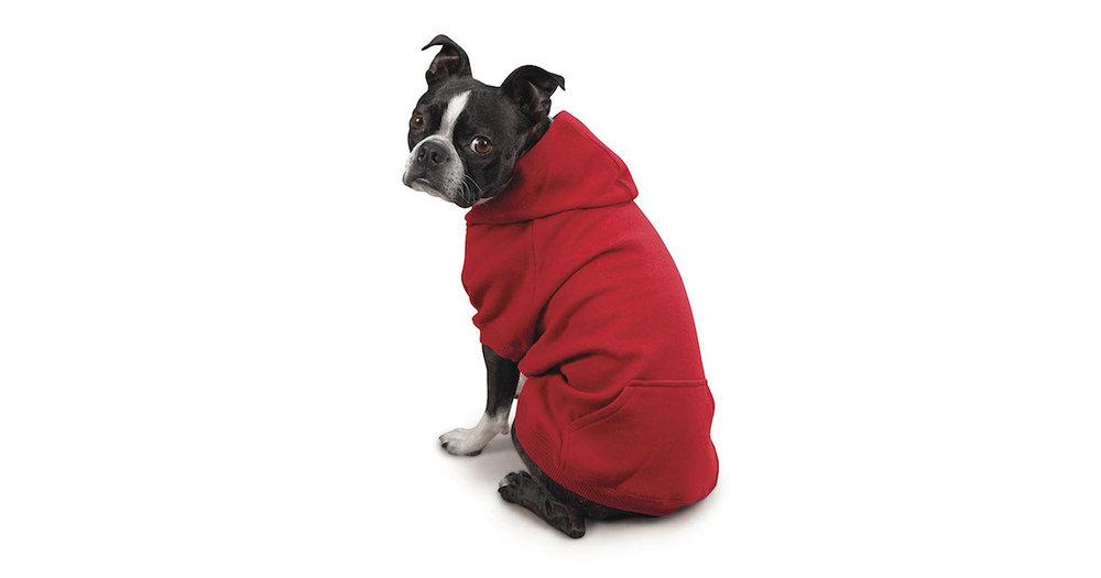 Dog In Hoodie.jpg