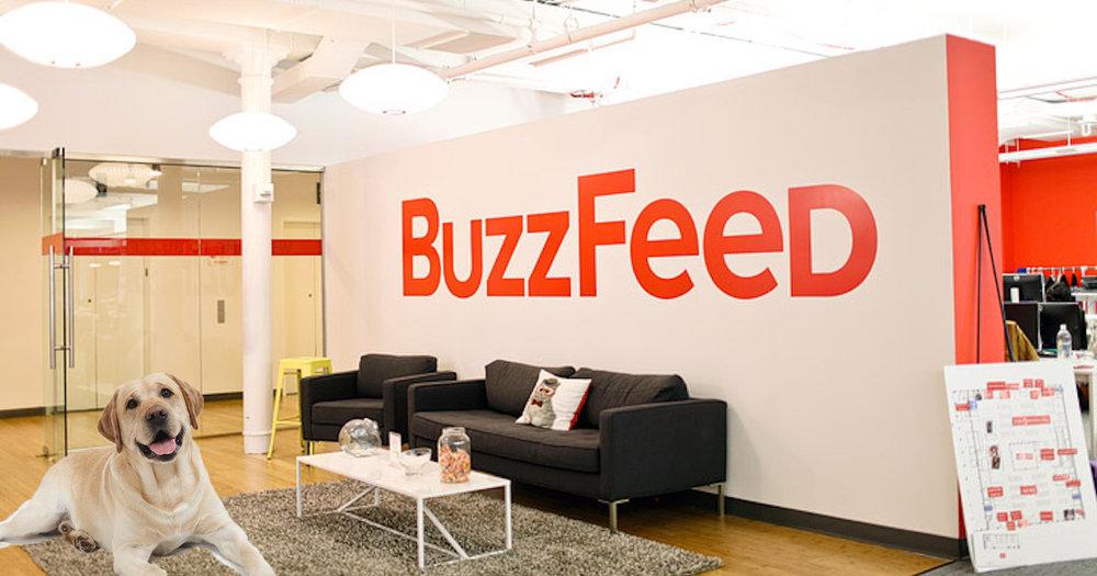 Buzzfeed office with dog.jpg