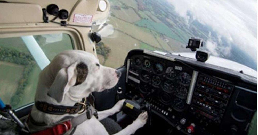 Dog Flying Plane.jpg