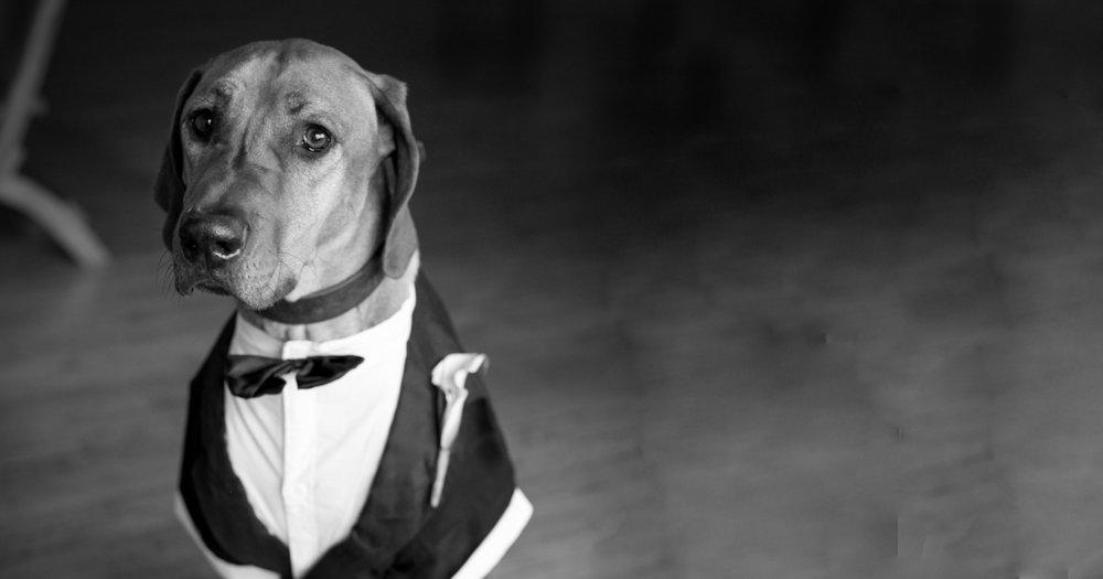RingBearer Dog.jpg