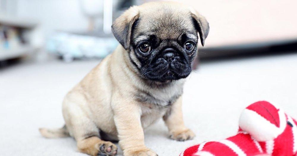 Ugly Dog.jpg