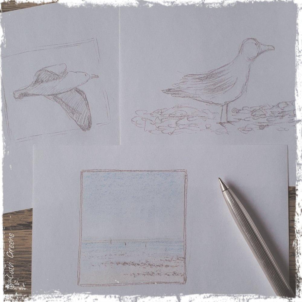 seaside seagull sketch | Cath Greene