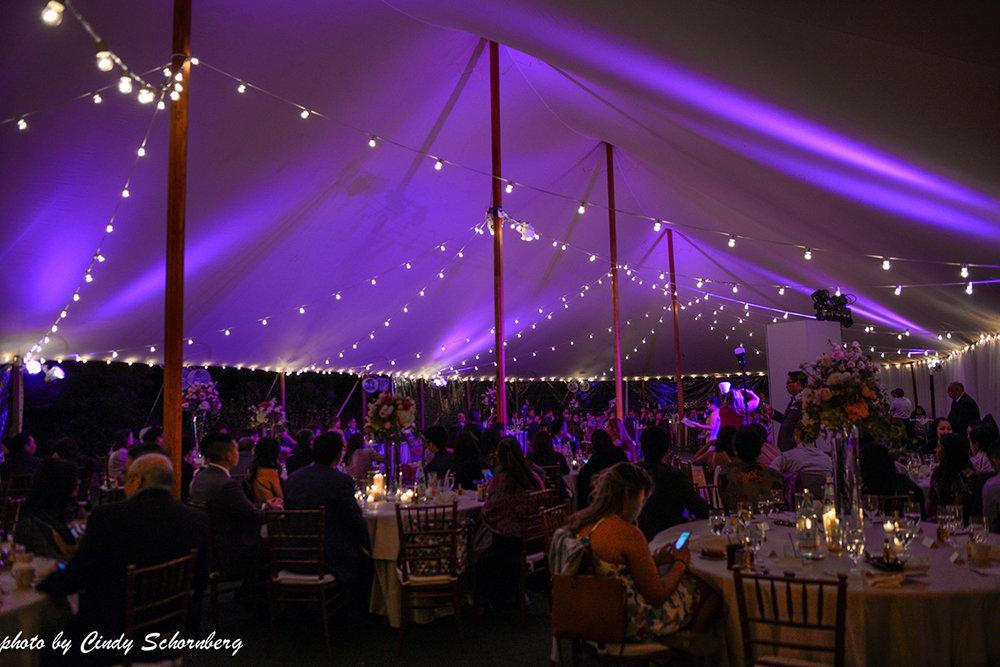 virginia_vineyard_wedding_027.jpg