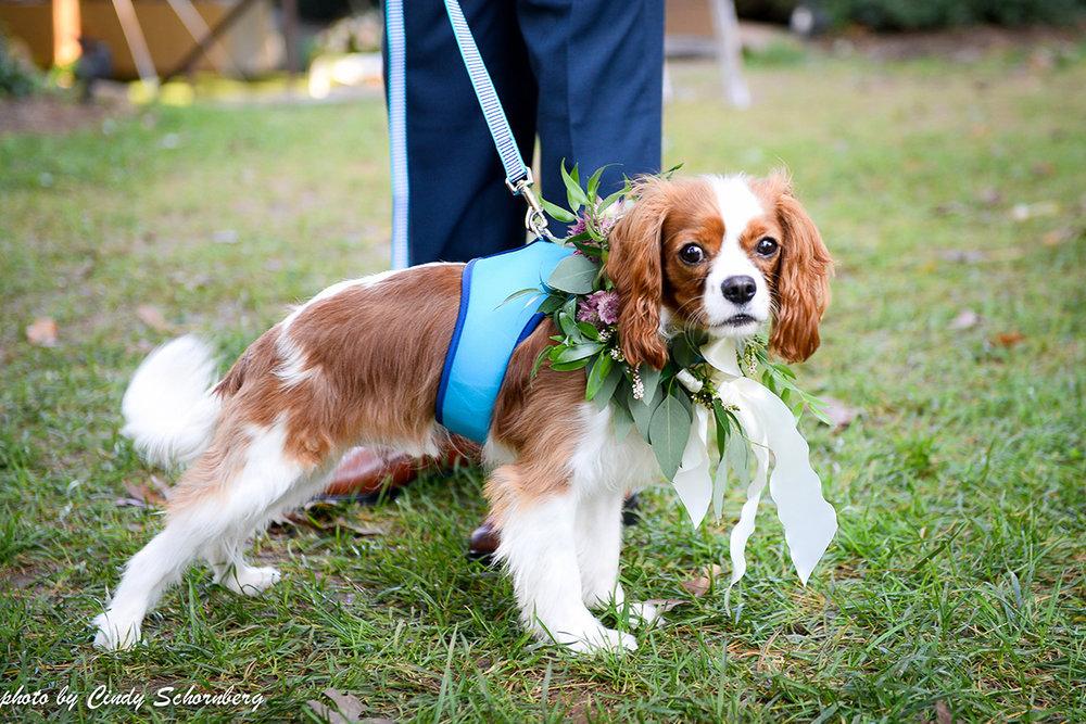 virginia_vineyard_wedding_003.jpg
