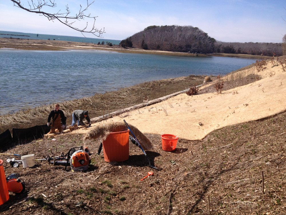 DURING: Coastal bank stabilization