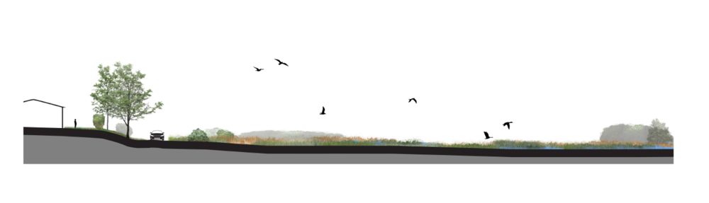 LATE-STAGE RESTORATION: A section illustration of the salt marsh after it has been established.
