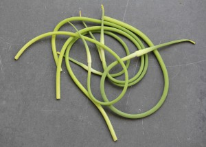 garlic scapes.jpg
