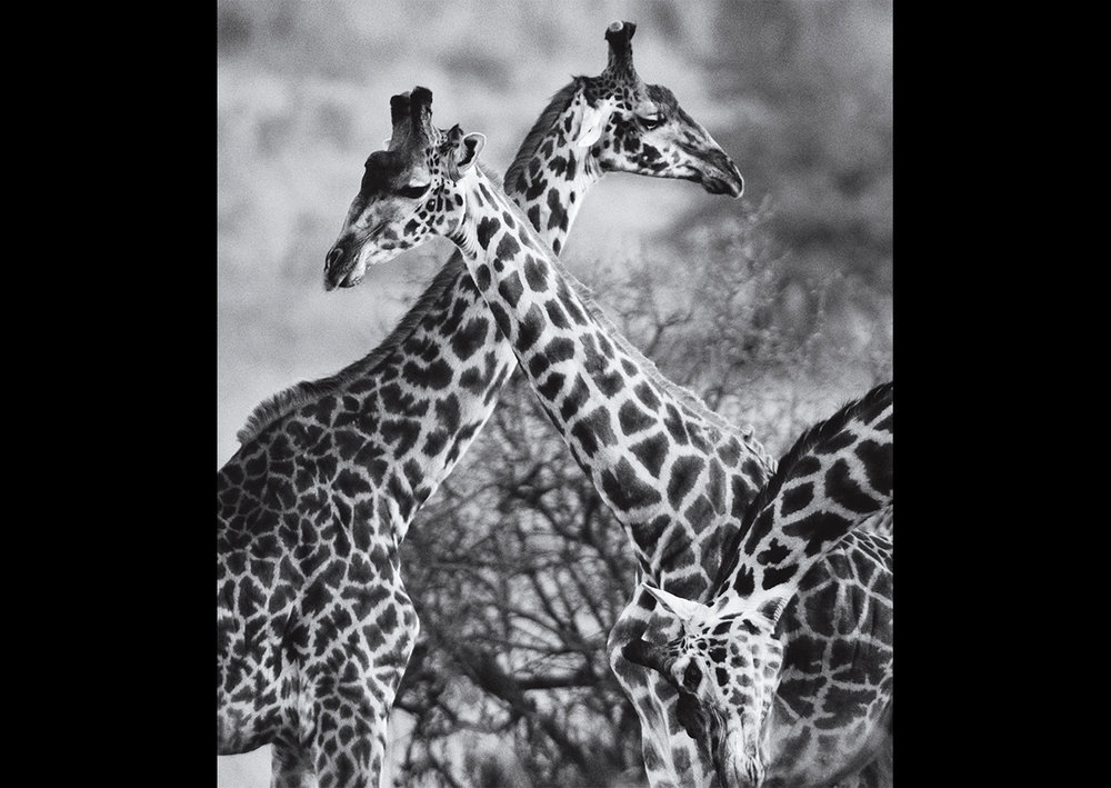 MJA_Africa_14.jpg