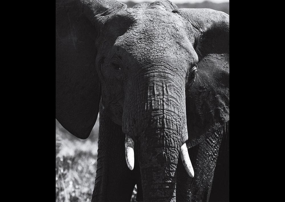 MJA_Africa_20.jpg