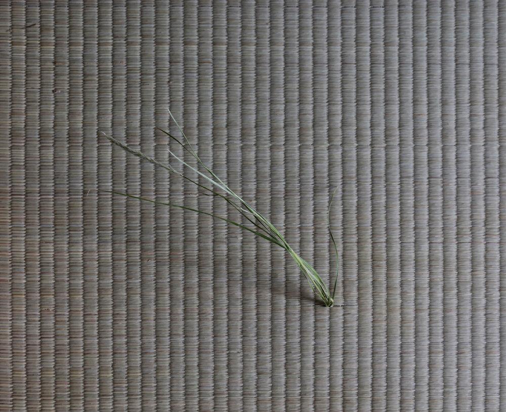 One Straw Revolution, detail, tatami, soil, various grasses, 2017