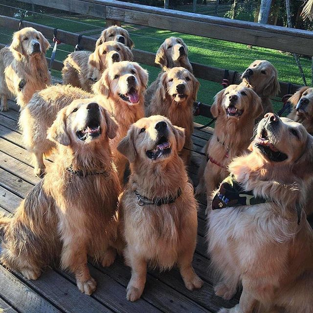 When everyone in the group shot looks amazing. 👏🏻👏🏻👏🏻 #groupshot #inspo #dogsofinstagram #pictureperfect #goals #repost