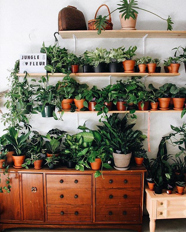 More greens, please! 🌿💚 #plants #green #goals #plantshop #plantsofinstagram #greenery 📷: @charlodussault