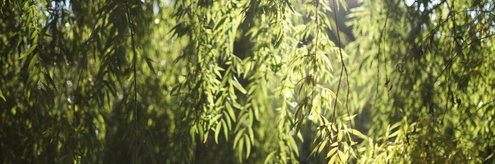 cropped-cropped-dsc_0240.jpg