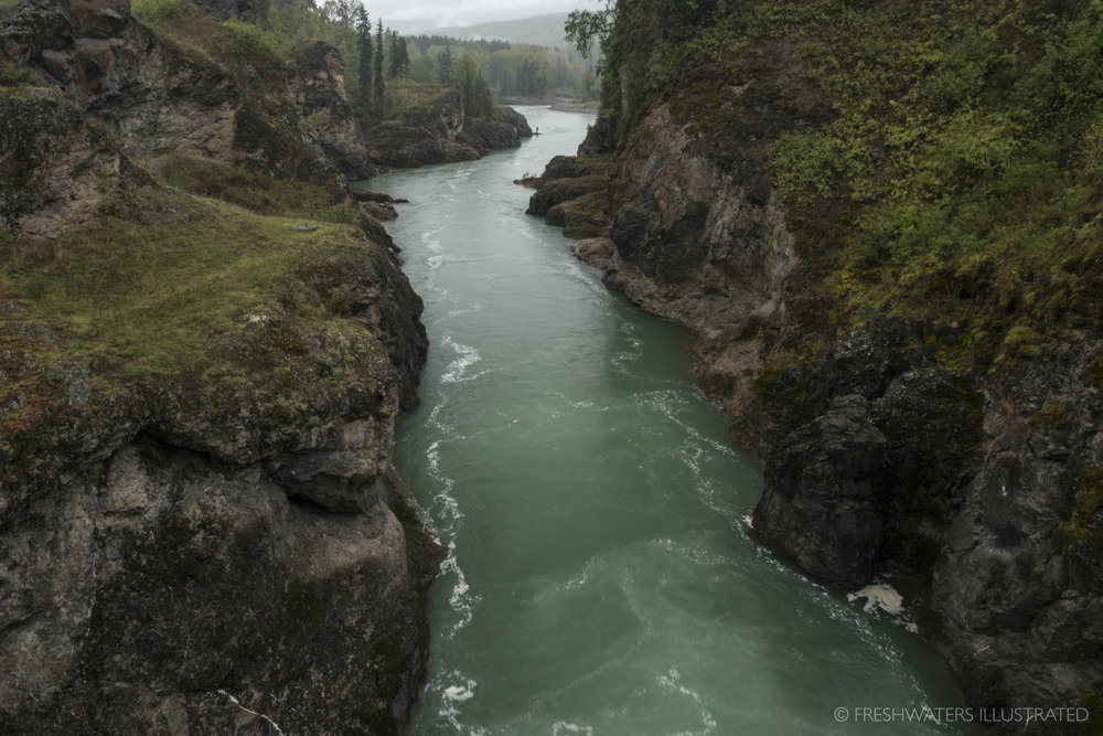 Bulkley River, British Colombia  www.FreshwatersIllustrated.org