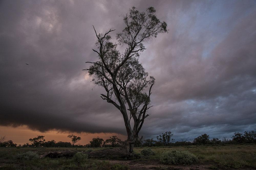Macquarie Marshes, Australia