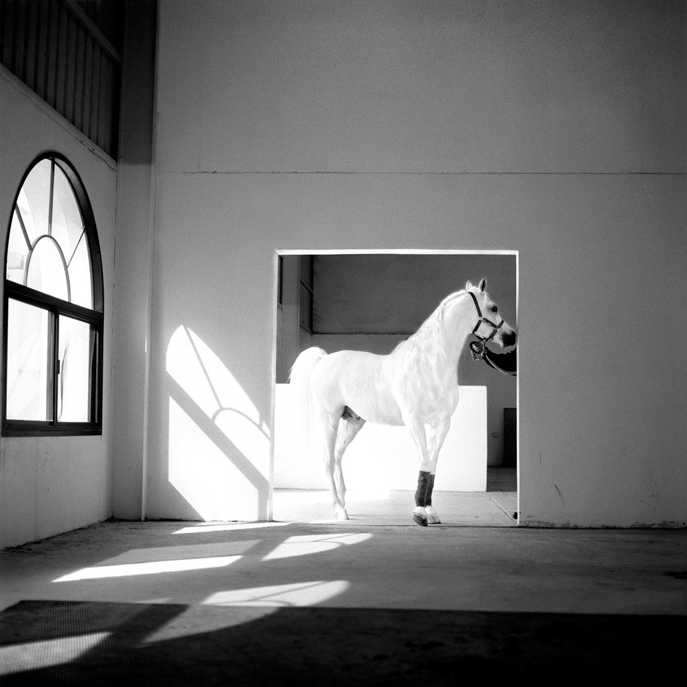 the-horse-meets-light-qatar-2003-photo-morten-krogvold.jpg