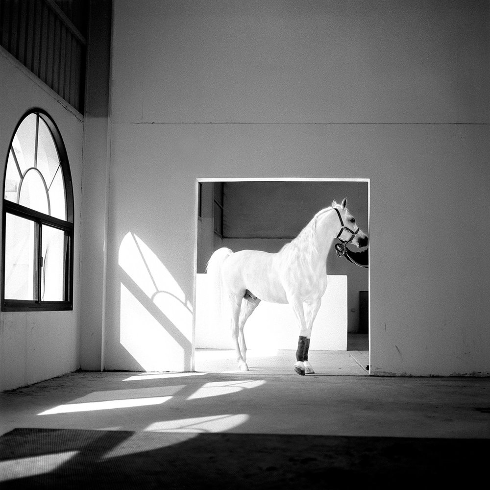 the-horse-meets-light-qatar-2003-photo-morten-krogvold.jpg