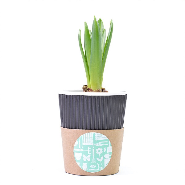 garden cup.jpg