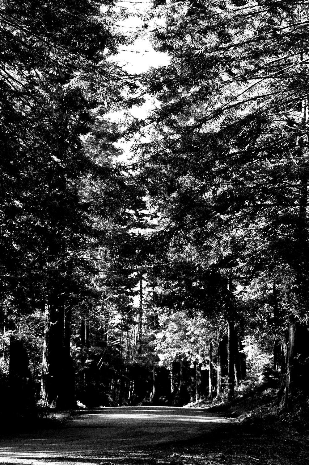 tree_ave.jpg