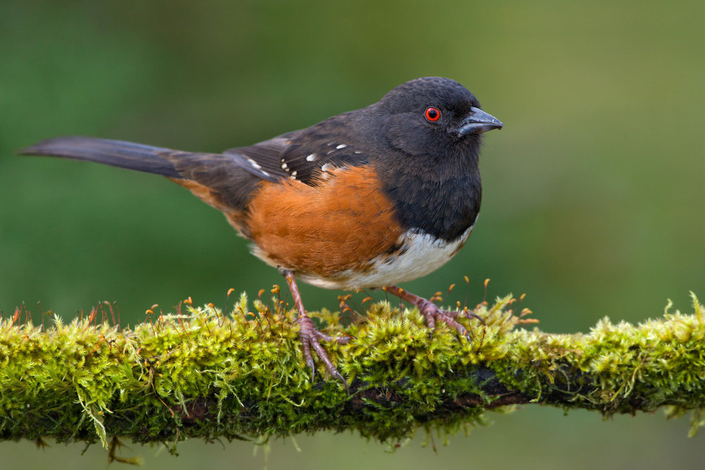 Reminds me of my grand-dad <3 Photo from National Audubon Society