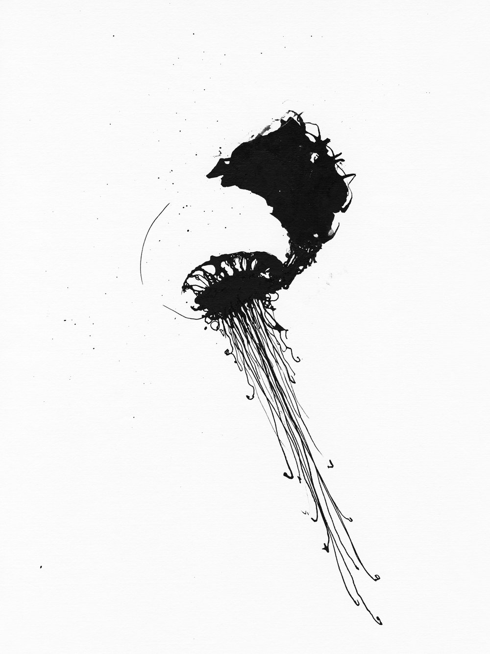 Jellyfish_1_11x14.jpg