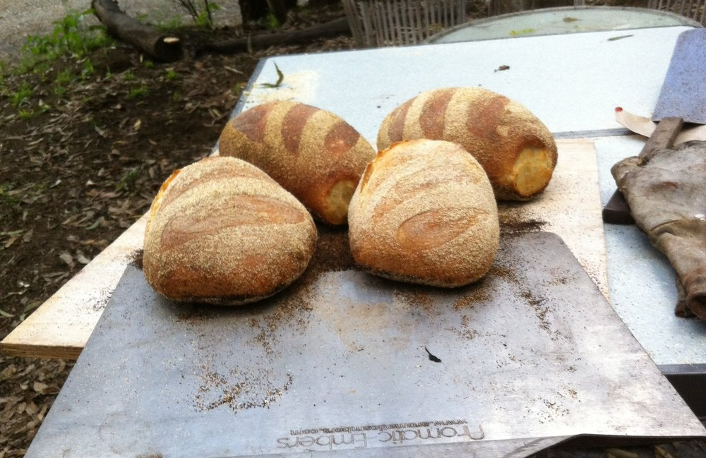 - Rated the most comprehensive and enjoyable sourdough class in Australia.