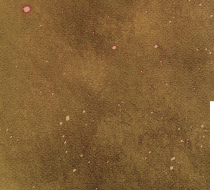 earth - embodiment & ritual