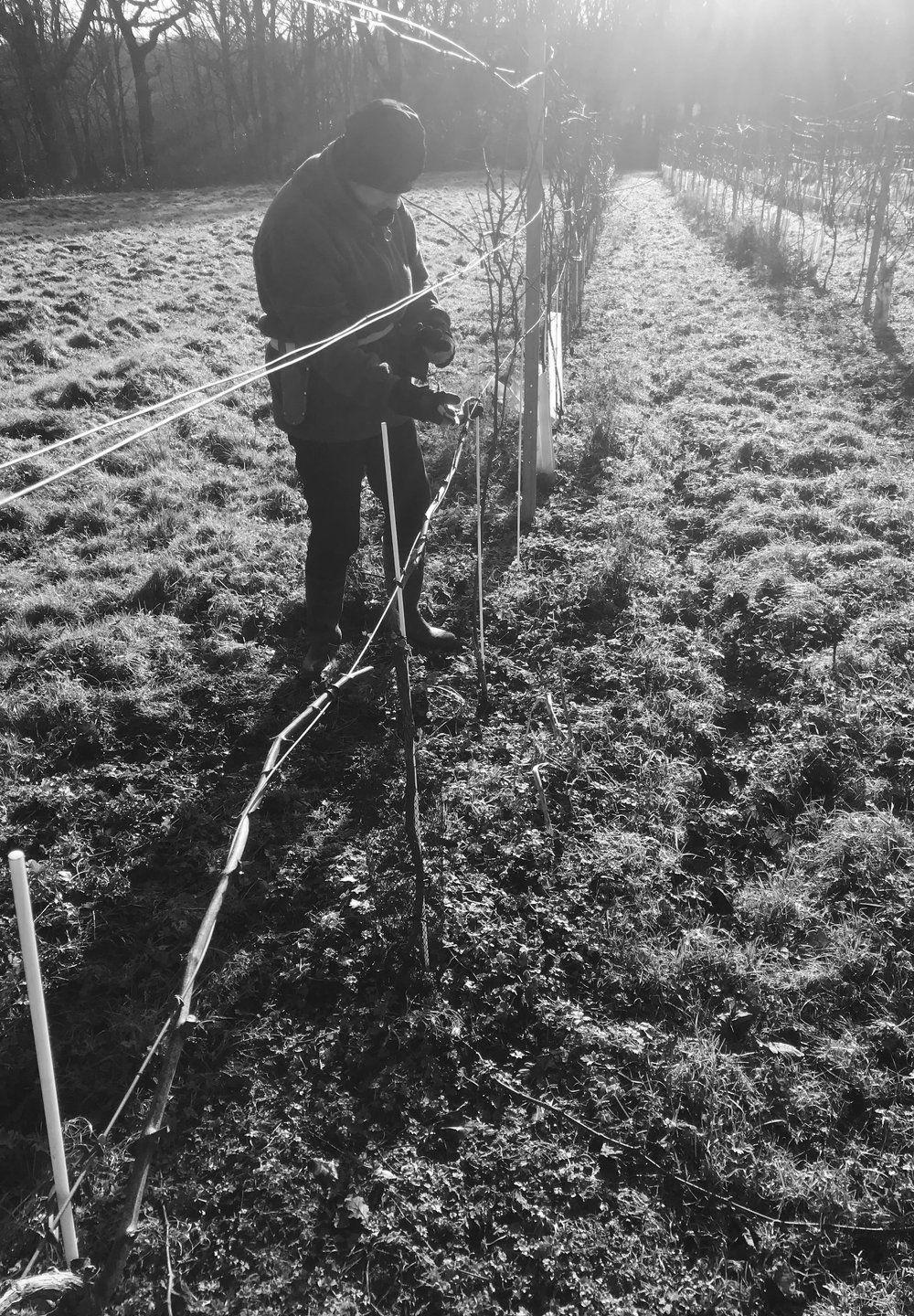 Winter Pruning 18.jpg
