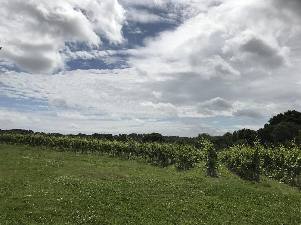 Vineyard 17.jpg