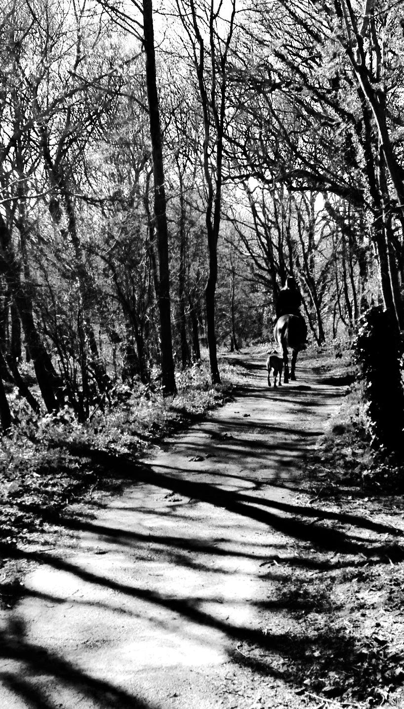cuckoo trail.jpg
