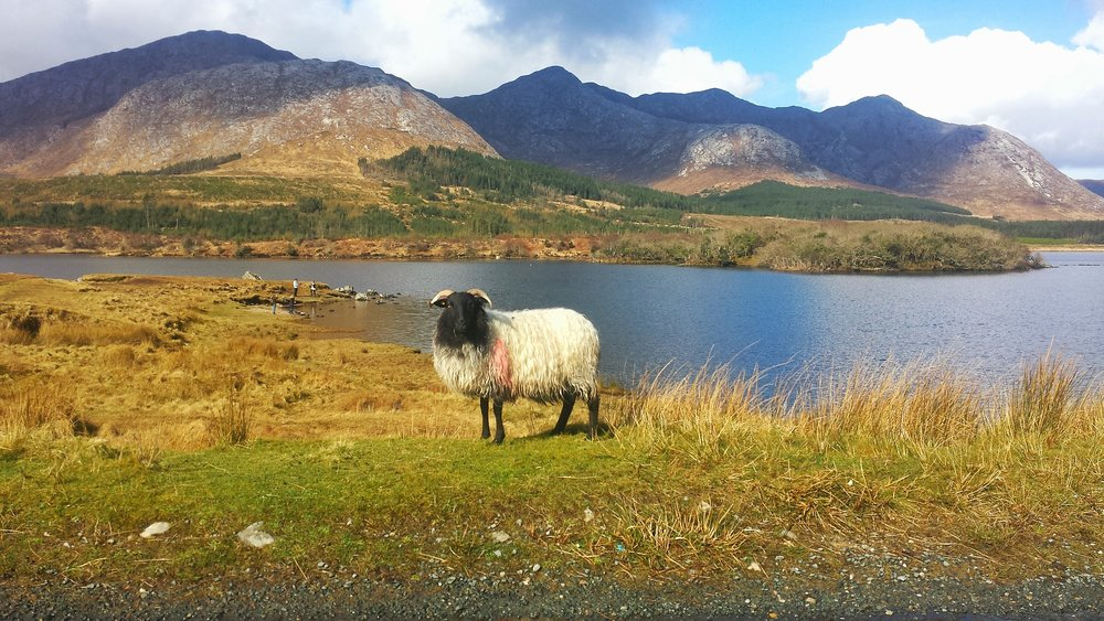 Connemara Lake Hotel  -
