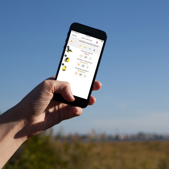 Birding App.jpg