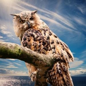 owl 300.jpg