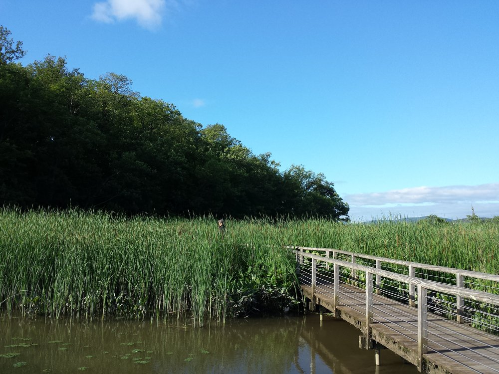 Audubon-Constitution-Marsh.jpg