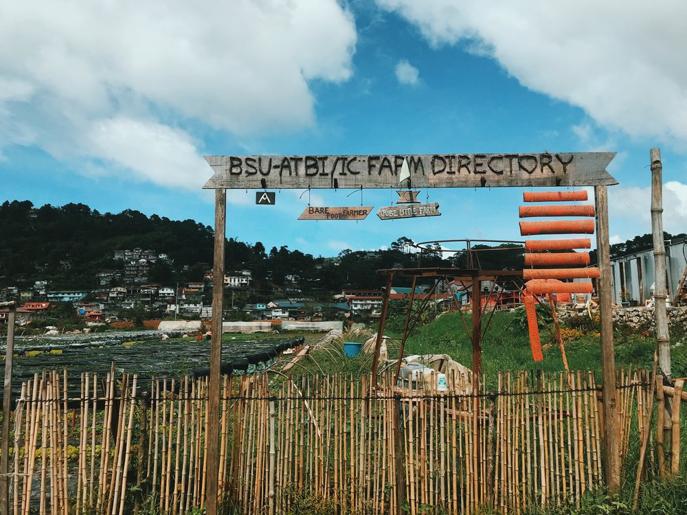 Strawberry Farm in La Trinidad