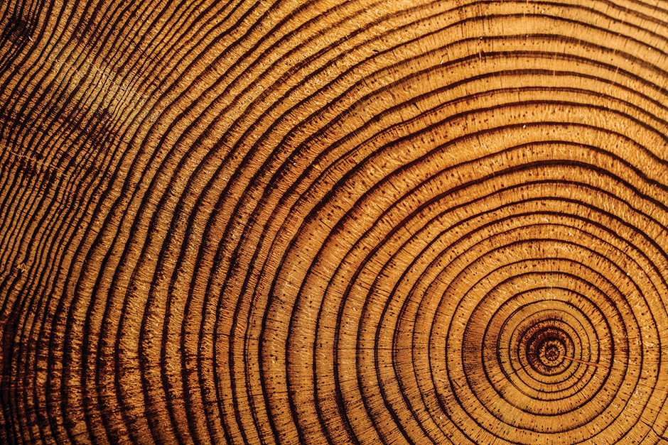 tree-rings-0019_web.jpg