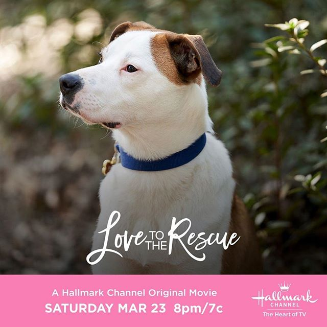 It's #NationalPuppyDay so what better way to celebrate all the pups then to watch #LovetotheRescue tonight with this cutie! ❤️🐶💐 #thebubblysesh #podcast #adoptdontshop #podcasting #hallmarkies #hearties #hallmarkchannel  #saturdaynight #rescuedogsofinstagram  #Repost @hallmarkchannel ・・・ Who could resist this adorable pup?! 😍 Meet this adorable real-life rescue dog Zip 🐶 in #LovetotheRescue, this Saturday at 8pm/7c. #SpringFever #AdoptionEverAfter