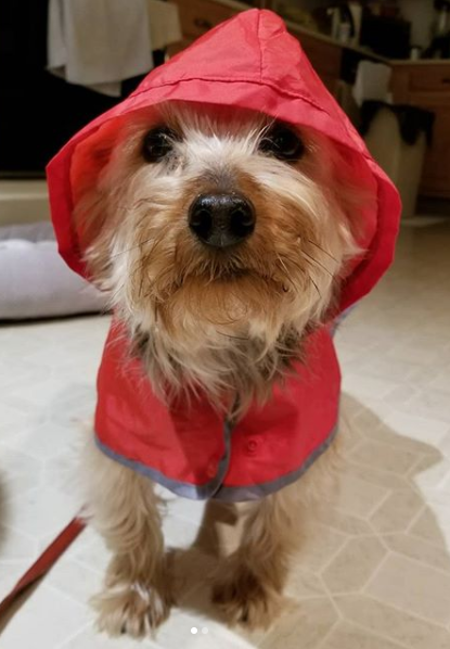 Zordon_Rain-Coat-Gear_Red_Cute-Dog-Puppy.PNG
