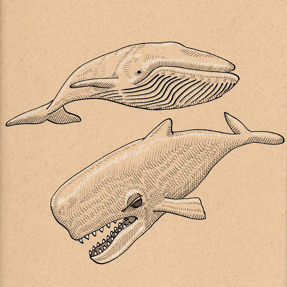 Day 12: Whale