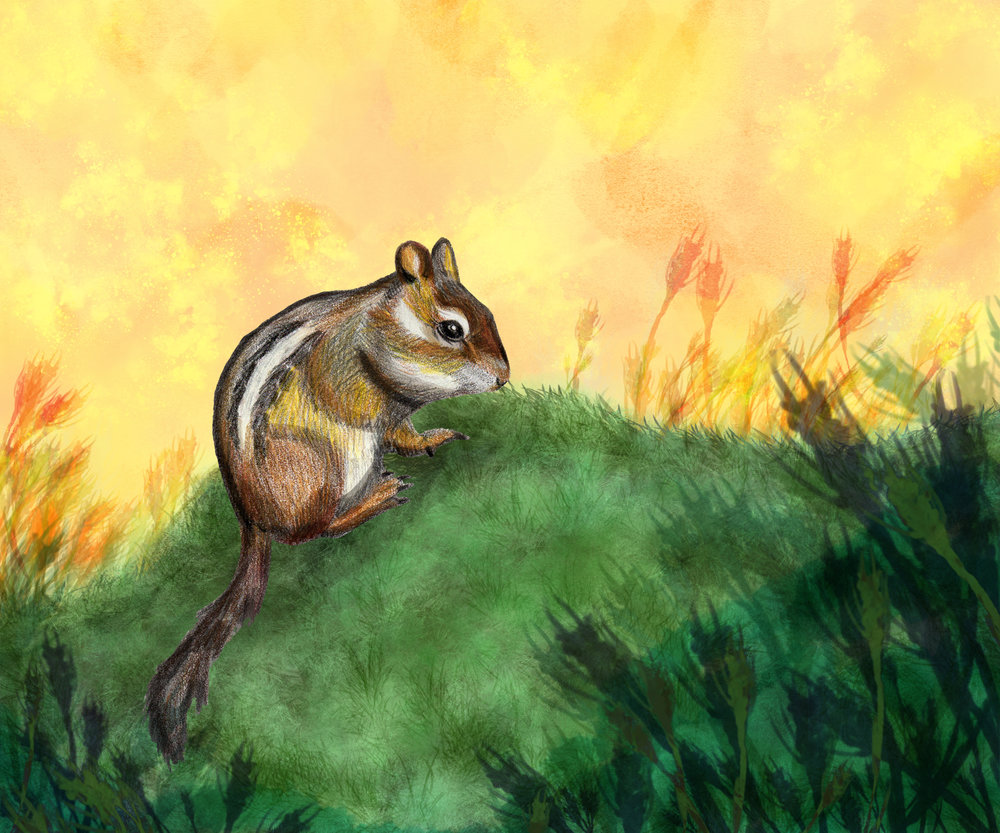 Cheerful Chipmunk